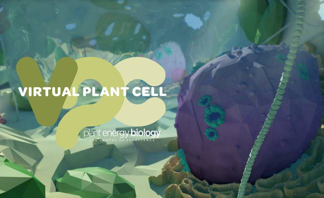 Cells in VR